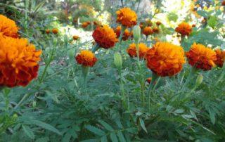 Flowers at Shangrila detox resort Pai