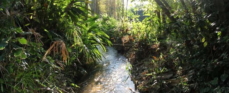 Gardens at Shangrila detox resort Pai